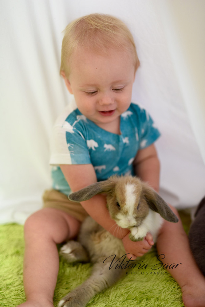 Baby boy with bunny photo shoot