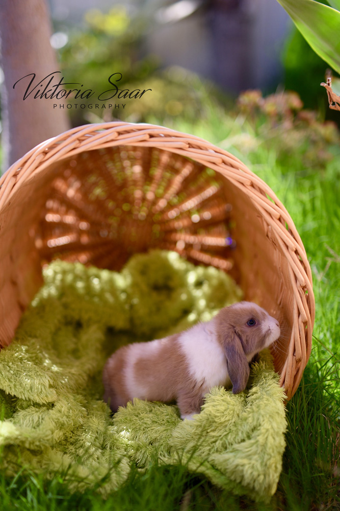 Cute bunny on the grass Easter photo shoot