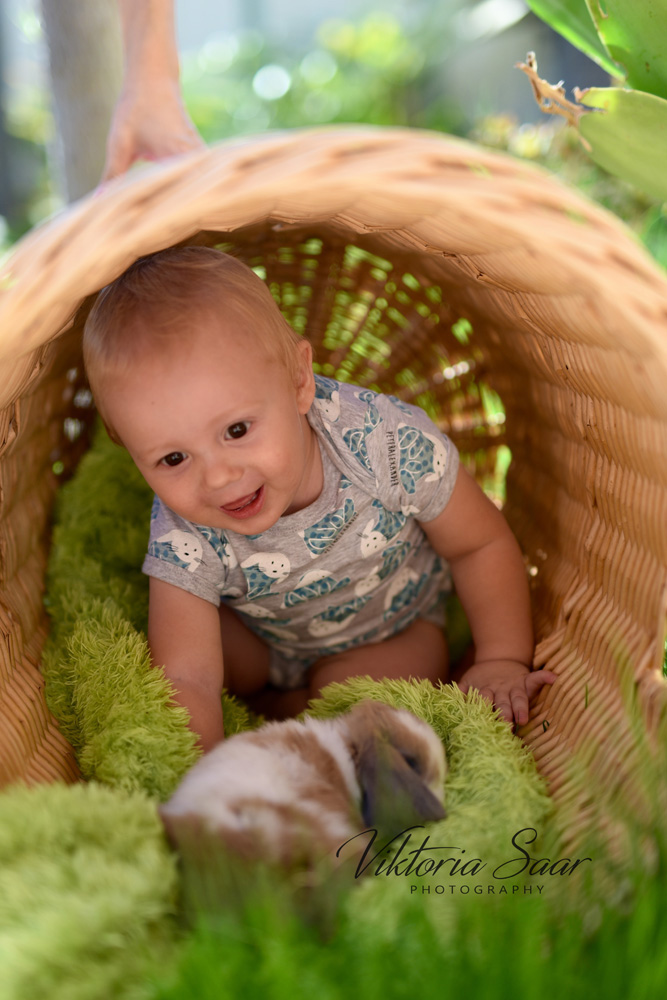 Cute little boy in the basket with bunny
